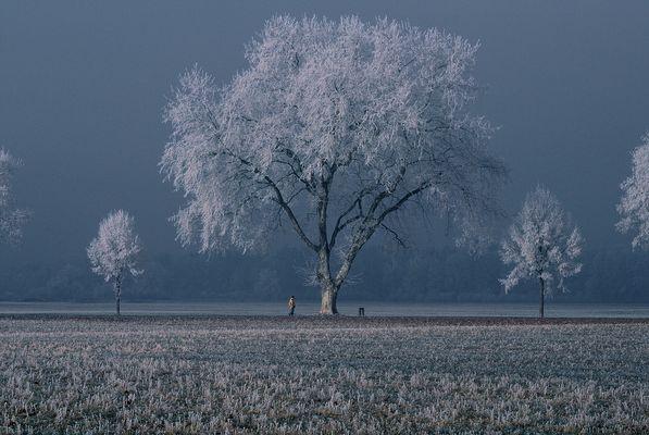 una foto dell,ultimo inverno 1