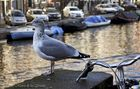 ...una gaviota en Amsterdam...