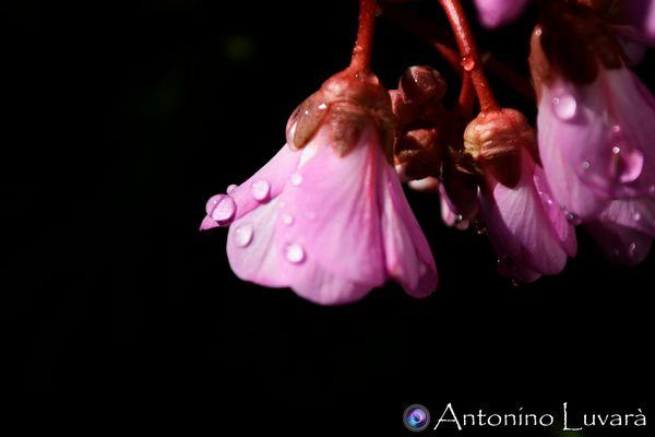 Una goccia sul fiore