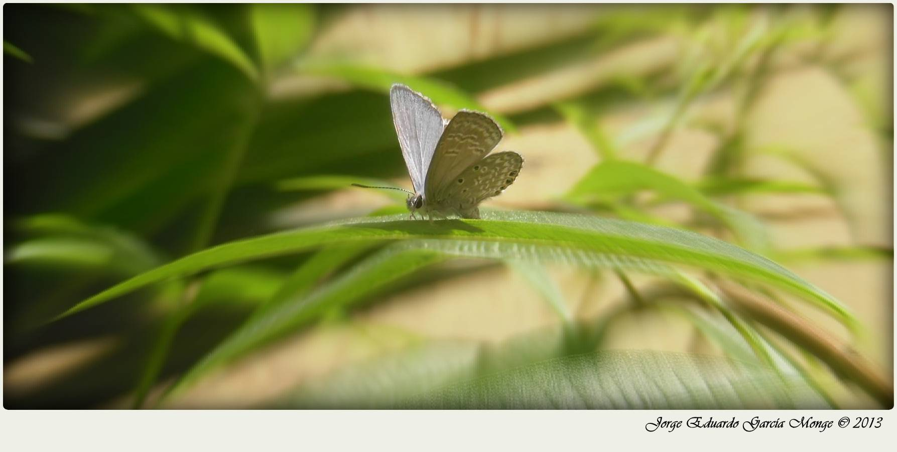 Una hermosa mariposa