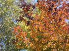 una mattina d'autunno