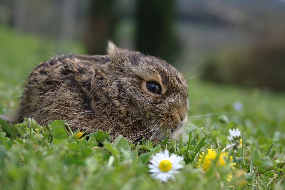 Una piccola lepre!!