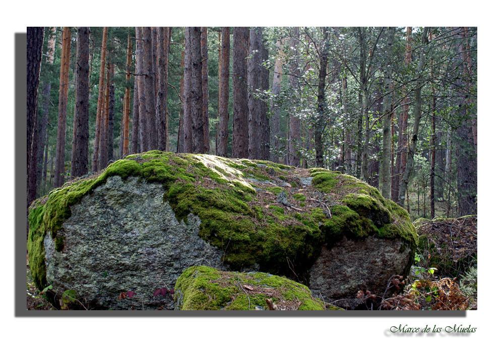 ...una piedra...