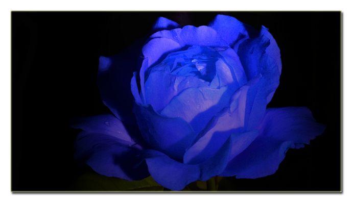 Una Rosa Blu - Michele Zarrillo (1982)