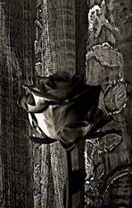 Una rosa di sera.............