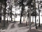 Una sagoma tra gli alberi.