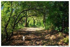Una suggestiva passeggiata nel bosco