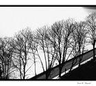Una tarde en blanco y negro.