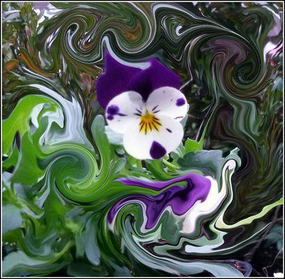 Una viola tra i colori