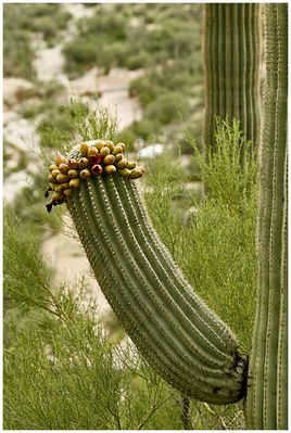Unanständiger Kaktus...