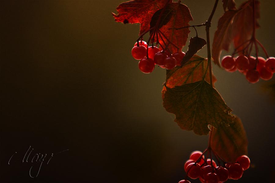 unaufhaltlich in den Herbst ...