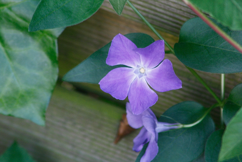 Unbekannte Blüte...