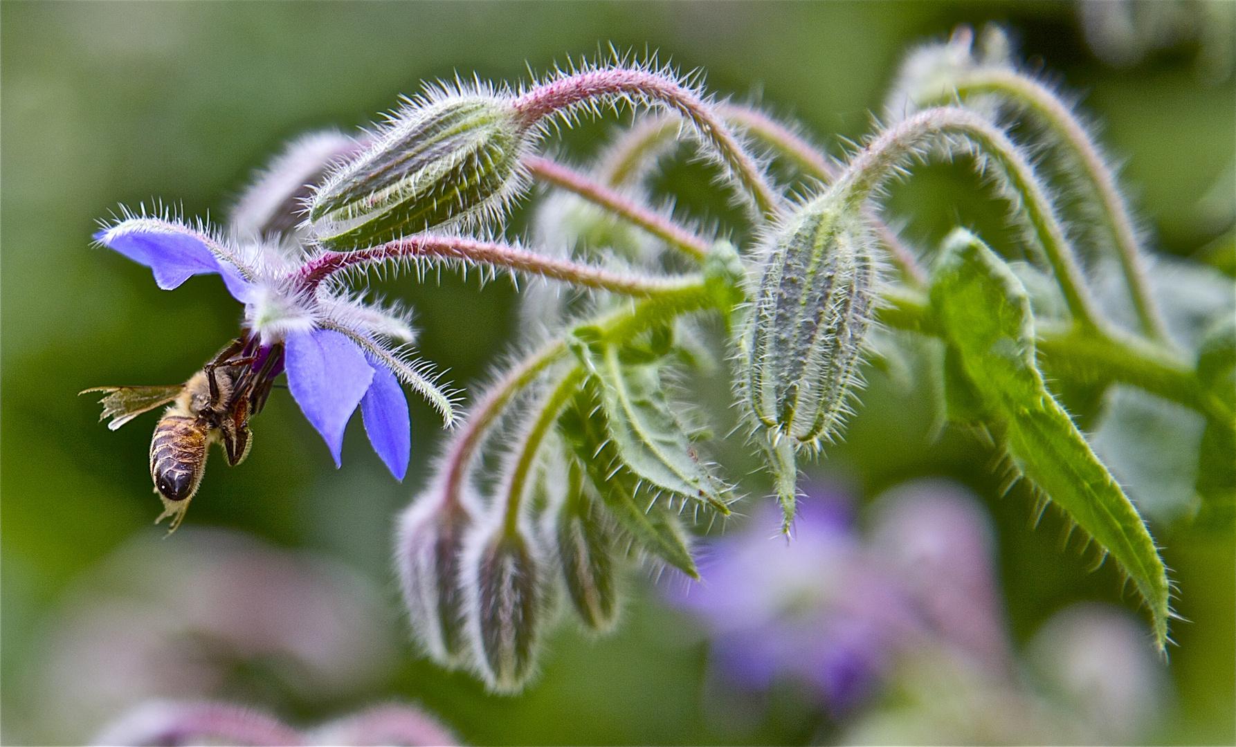 Unbekannte Blumen im Garten.
