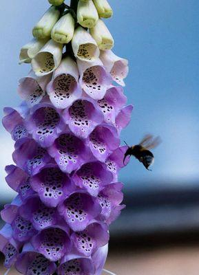 Unbekannte Blumen und Biene