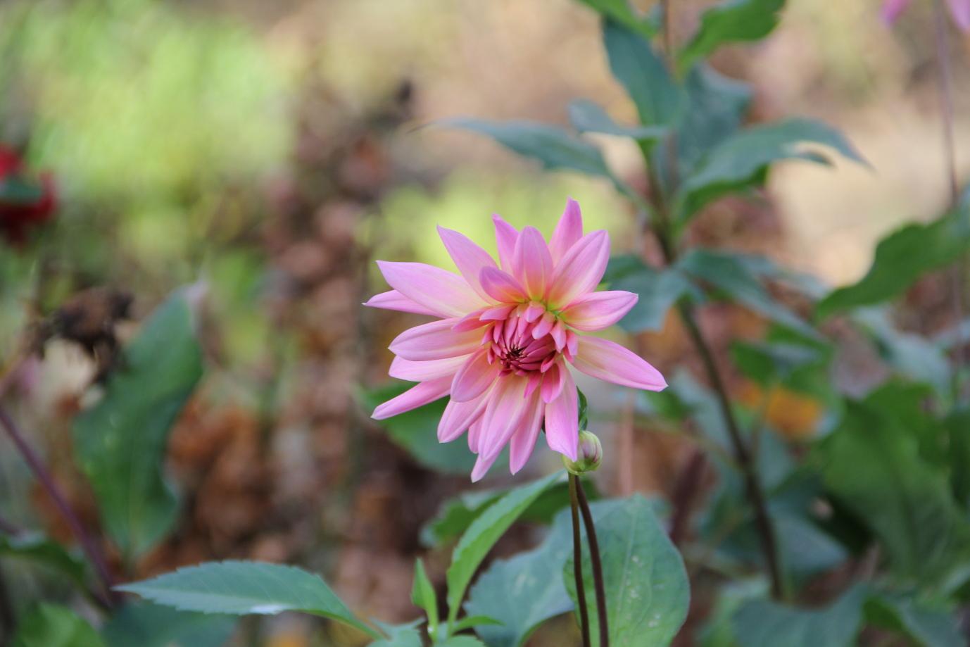 Unbekannte Herbstblume