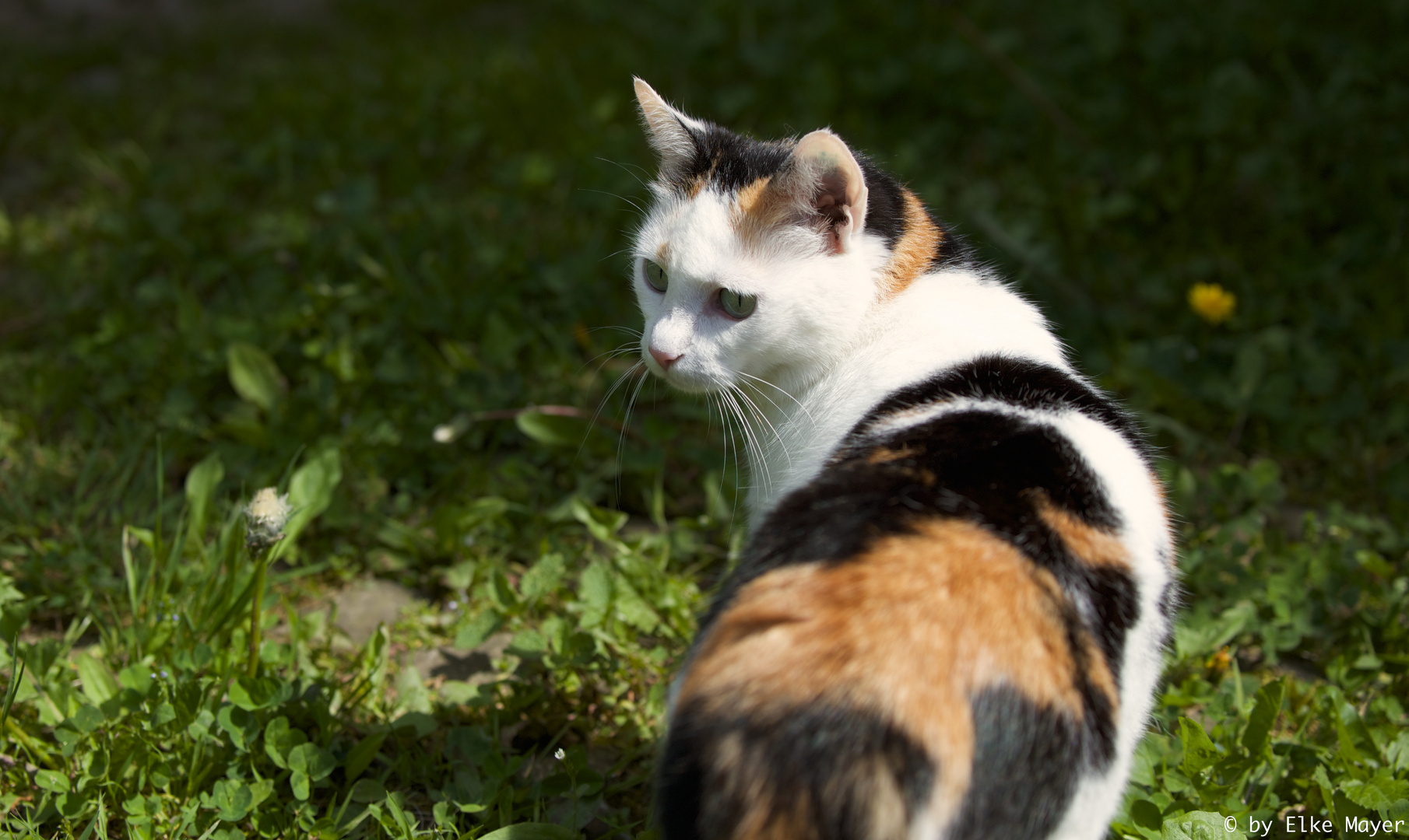 Unbekannte Katze