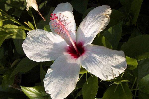 Unbekannte Pflanze auf Zypern