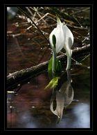 unbekannte Wasserpflanze