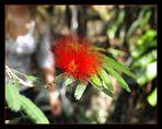 unbekannte wunder schöne Blüte