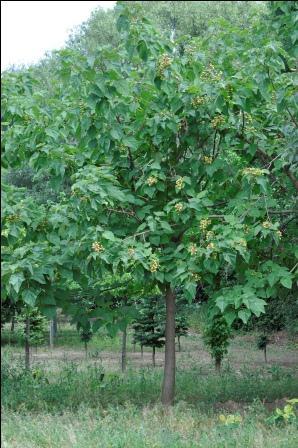 Unbekannter Baum (3)