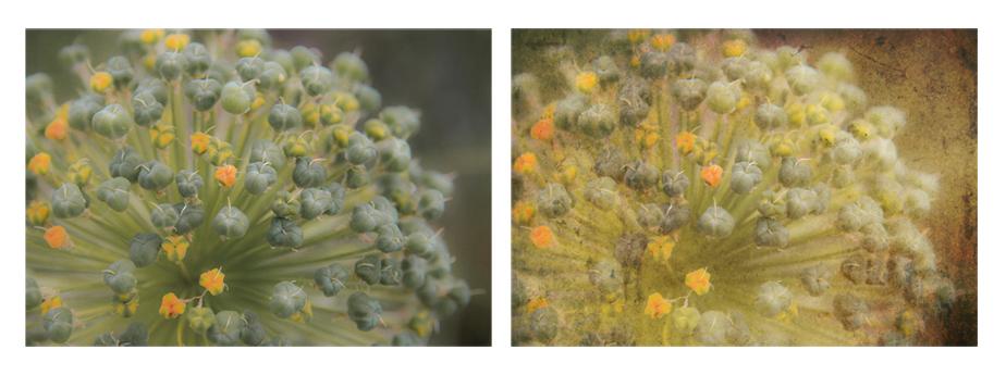 Unbekannter Blumenzauber