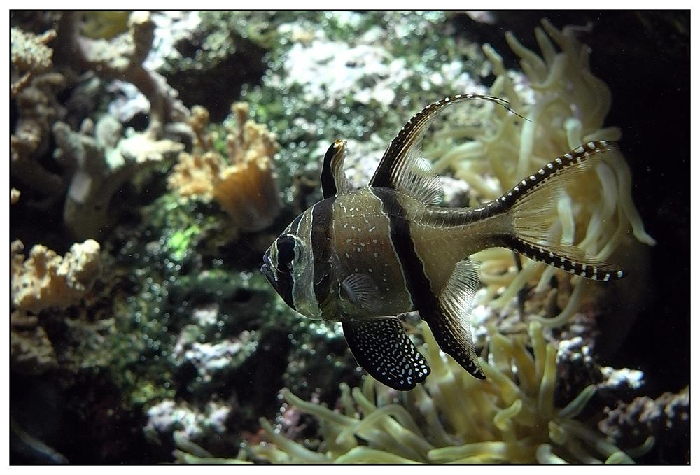 Unbekannter Fisch...