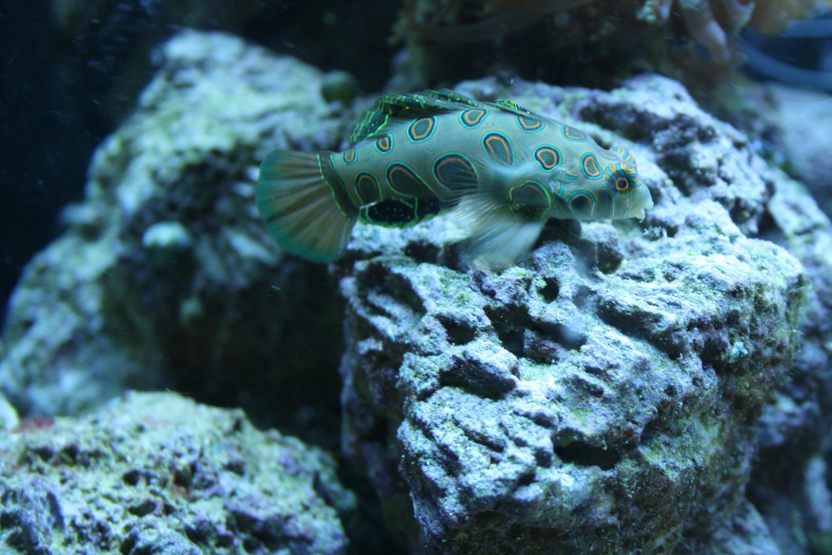 unbekannter Fisch