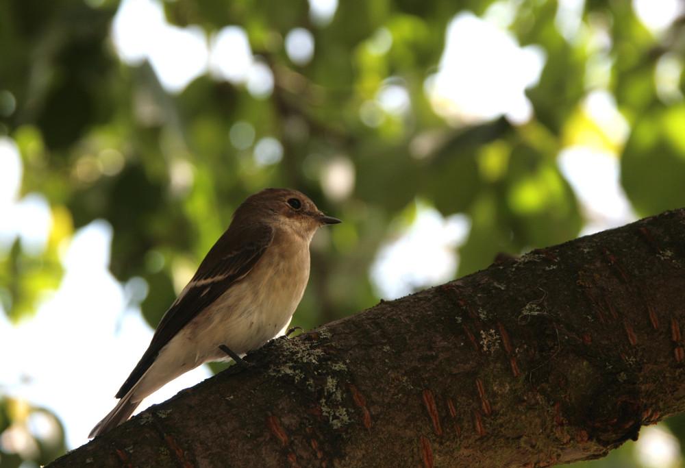 unbekannter kleiner Vogel