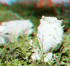 Unbekannter Pilz aus Österreich - 1