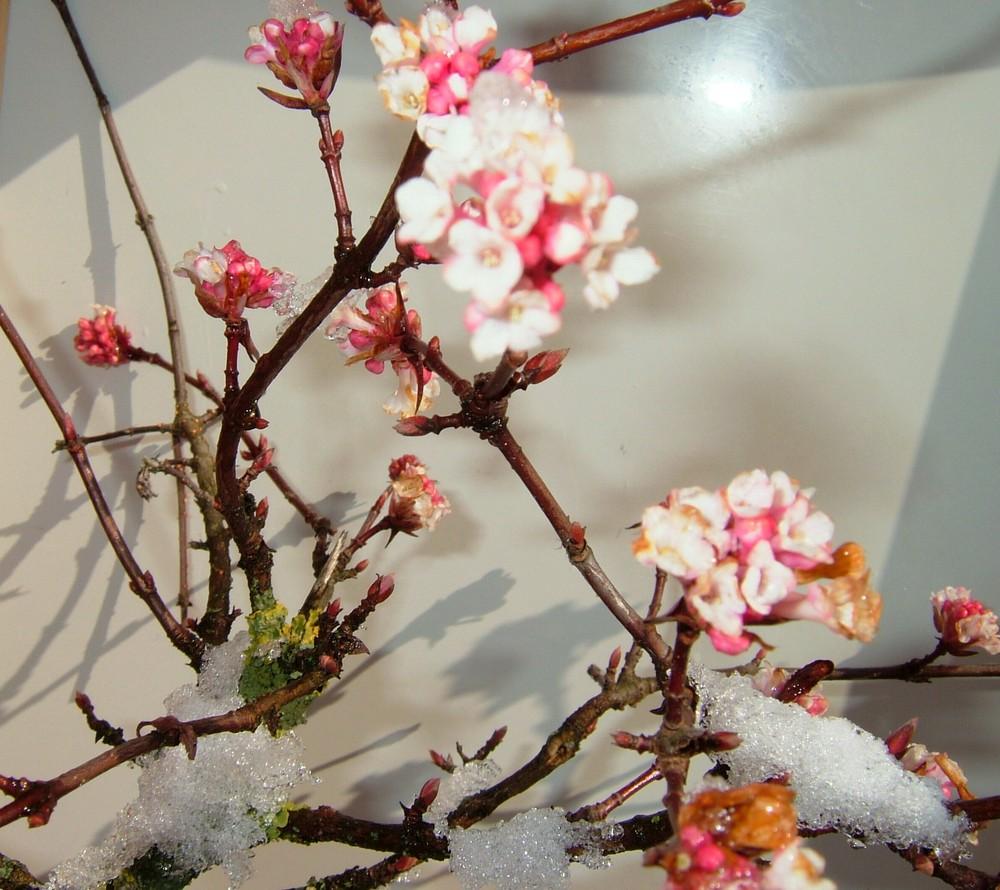 unbekannter strauch bl ht auch im winter dezember januar foto bild pflanzen pilze. Black Bedroom Furniture Sets. Home Design Ideas