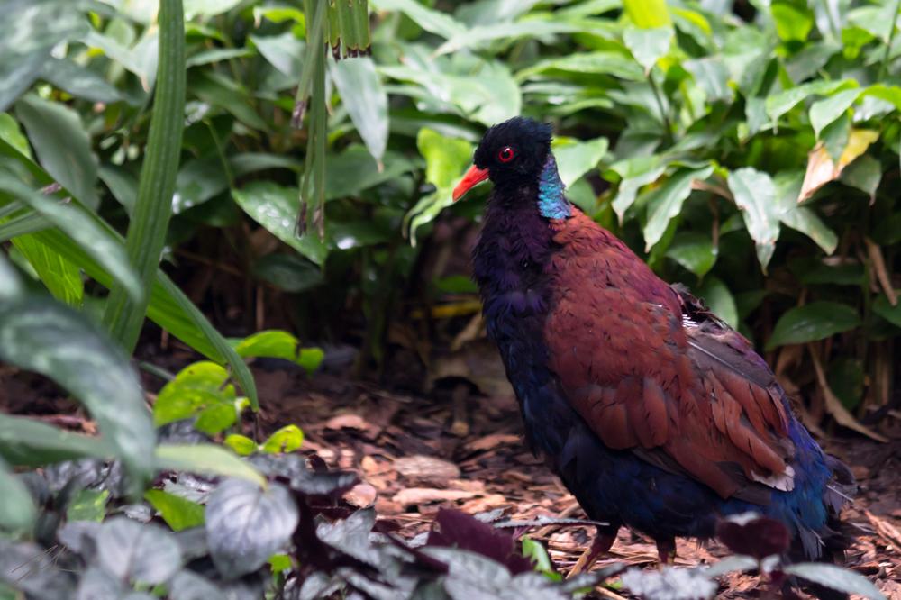 Unbekannter Vogel 2
