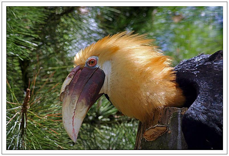 Unbekannter Vogel?