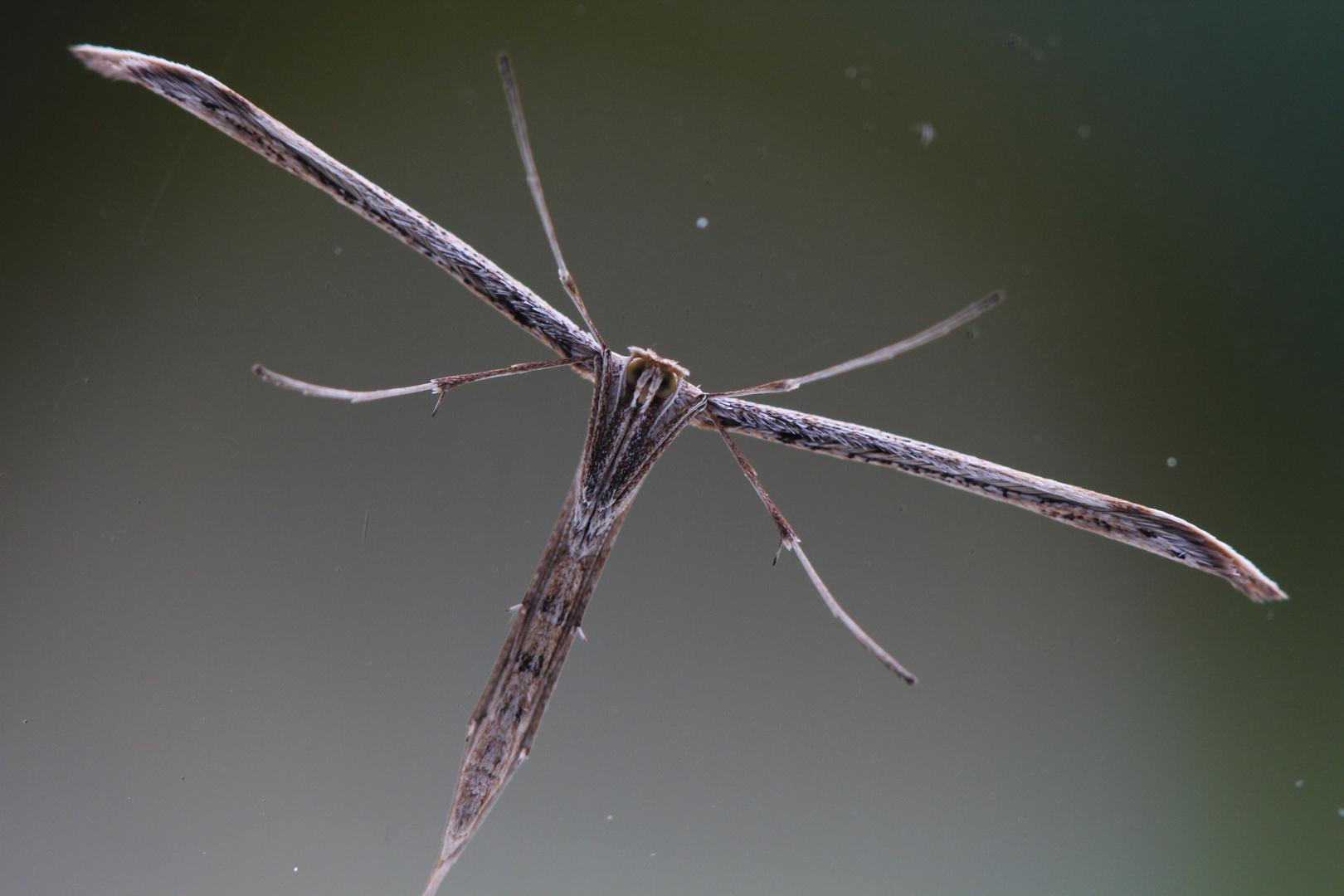 Unbekanntes Flugobjekt