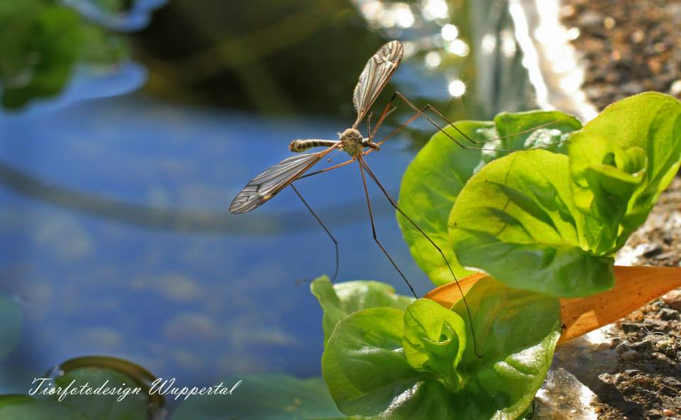 Unbekanntes Flugobjekt am Teich