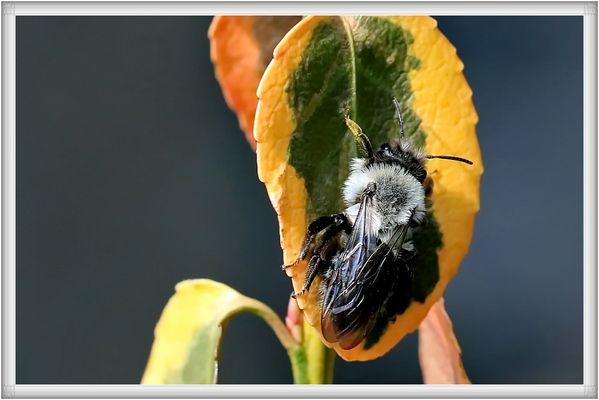 unbekanntes Insekt...
