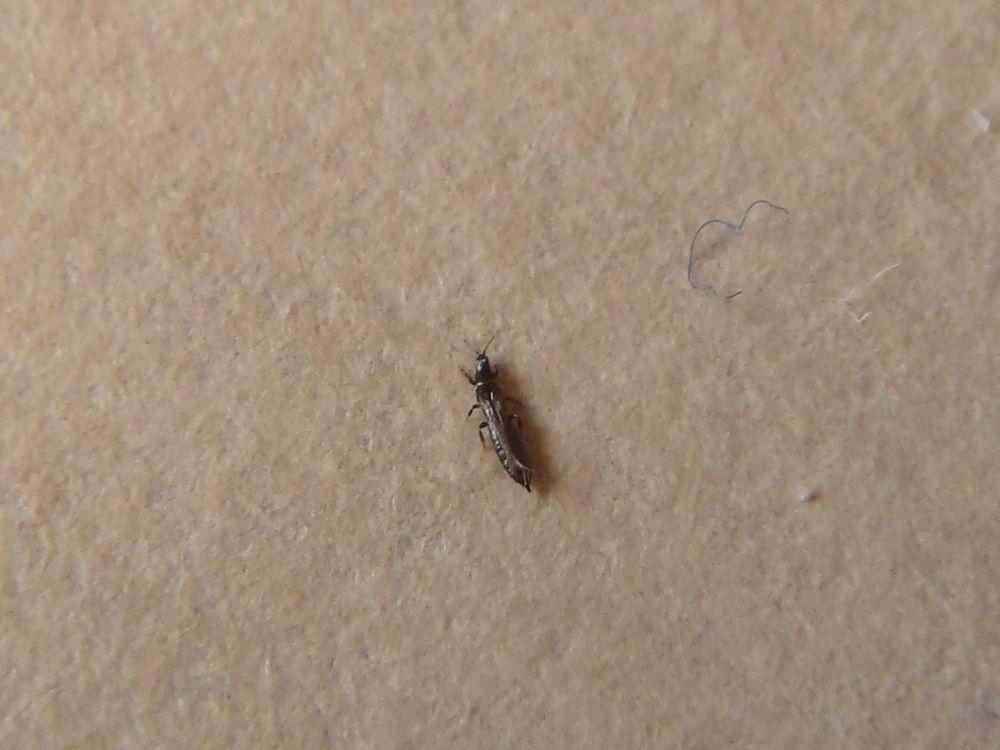 Unbekanntes lästiges Insekt