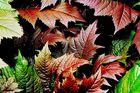 Unbeschriebene Blätter