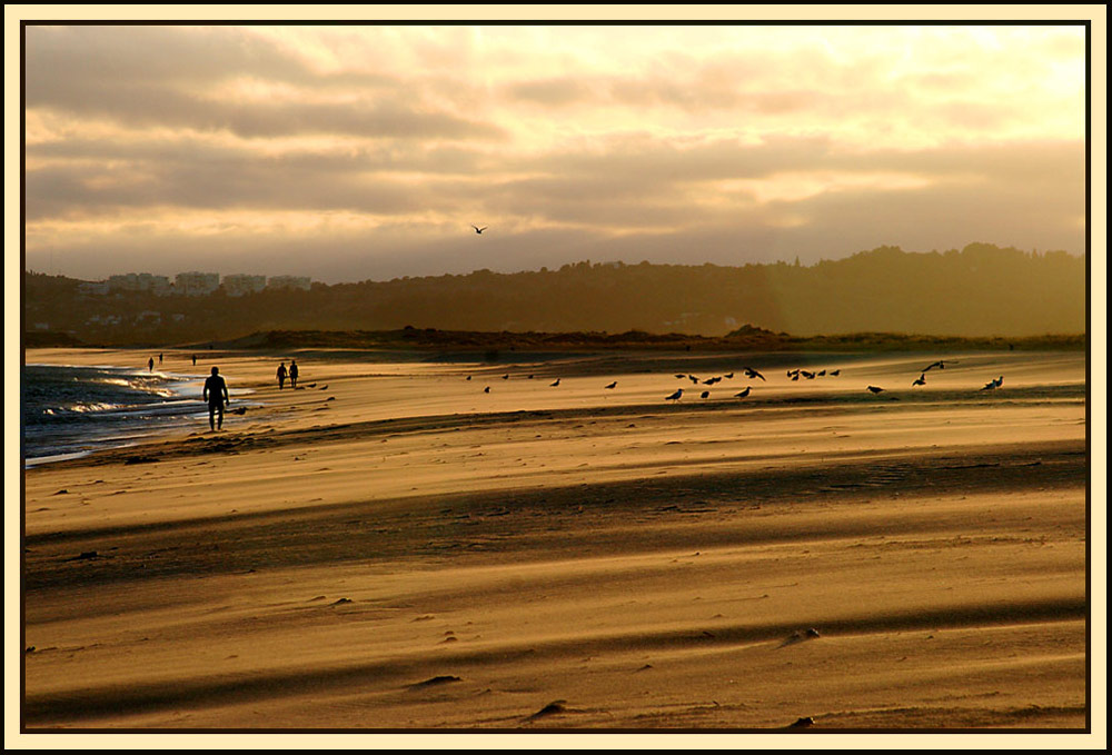 und abends gehört der Strand den Möven