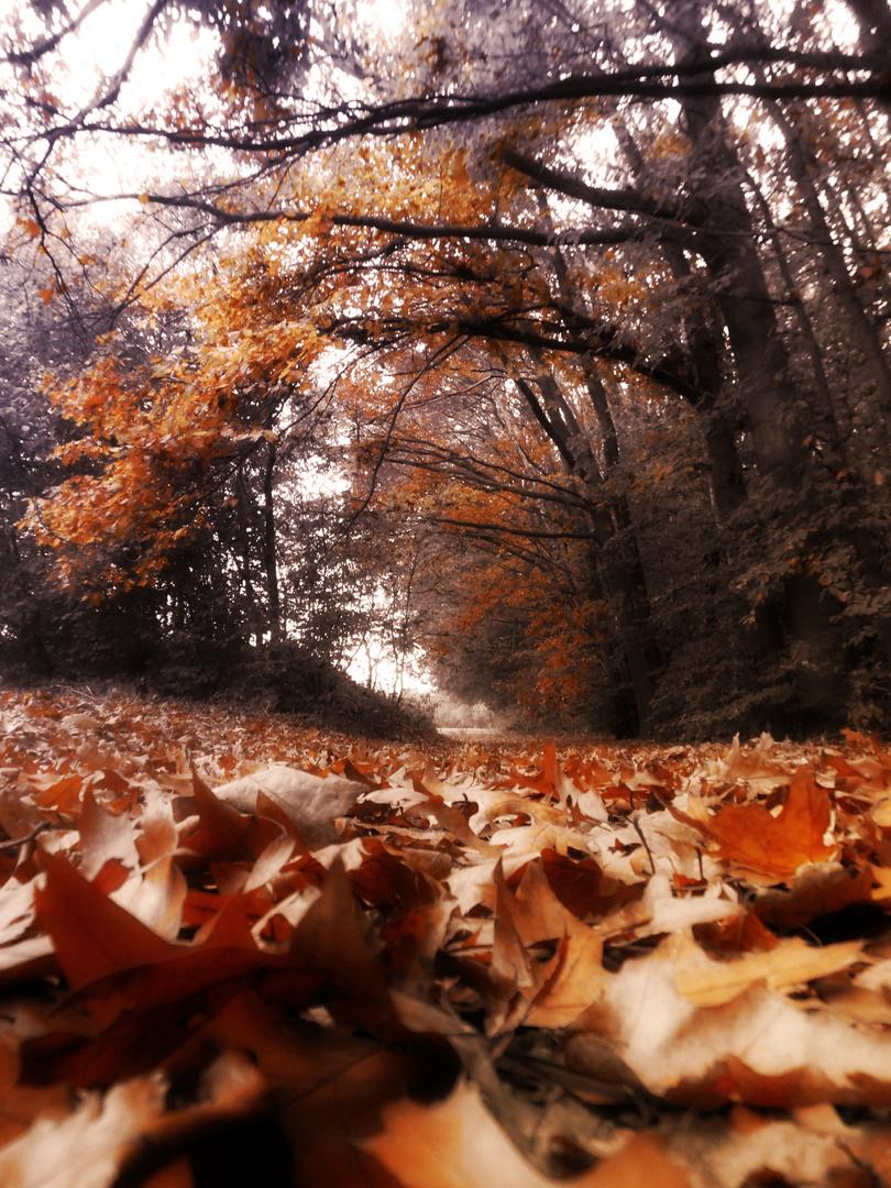 Und als die letzten Blätter fielen....