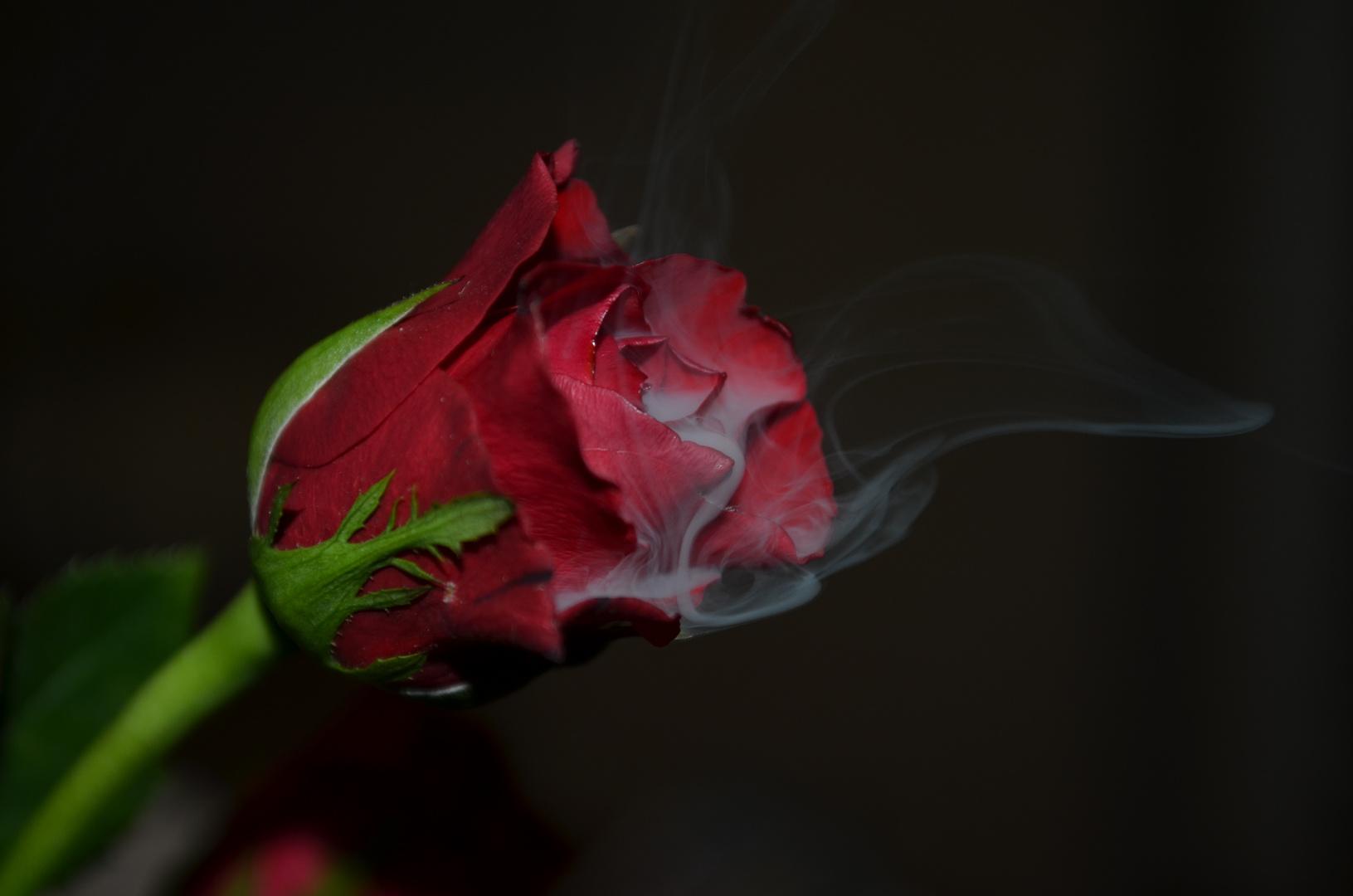 und am ende bleibt nur rauch...