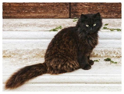 Und auch am Weltkatzentag ...