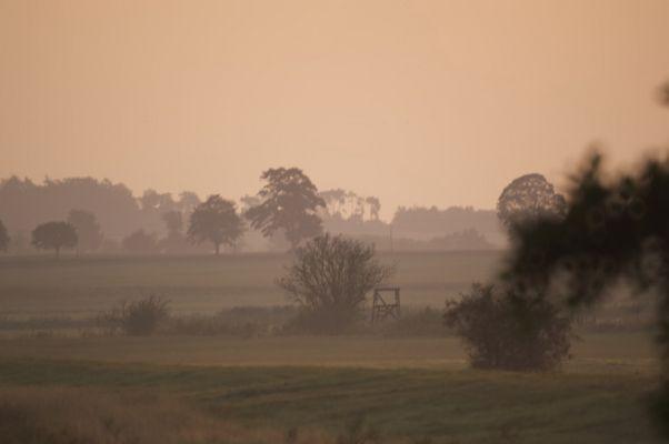 ..... und aus den Wiesen steiget der weisse Nebel wunderbar