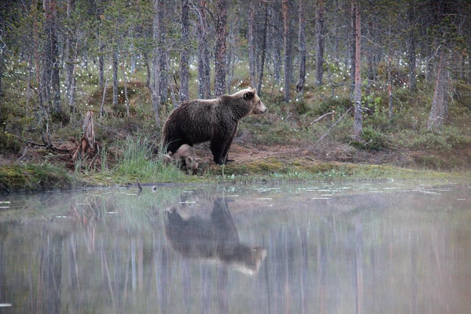 ...und Bären
