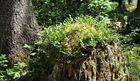 .. und bei der Rückfahrt ging noch durch einen Wald zum Ödensee