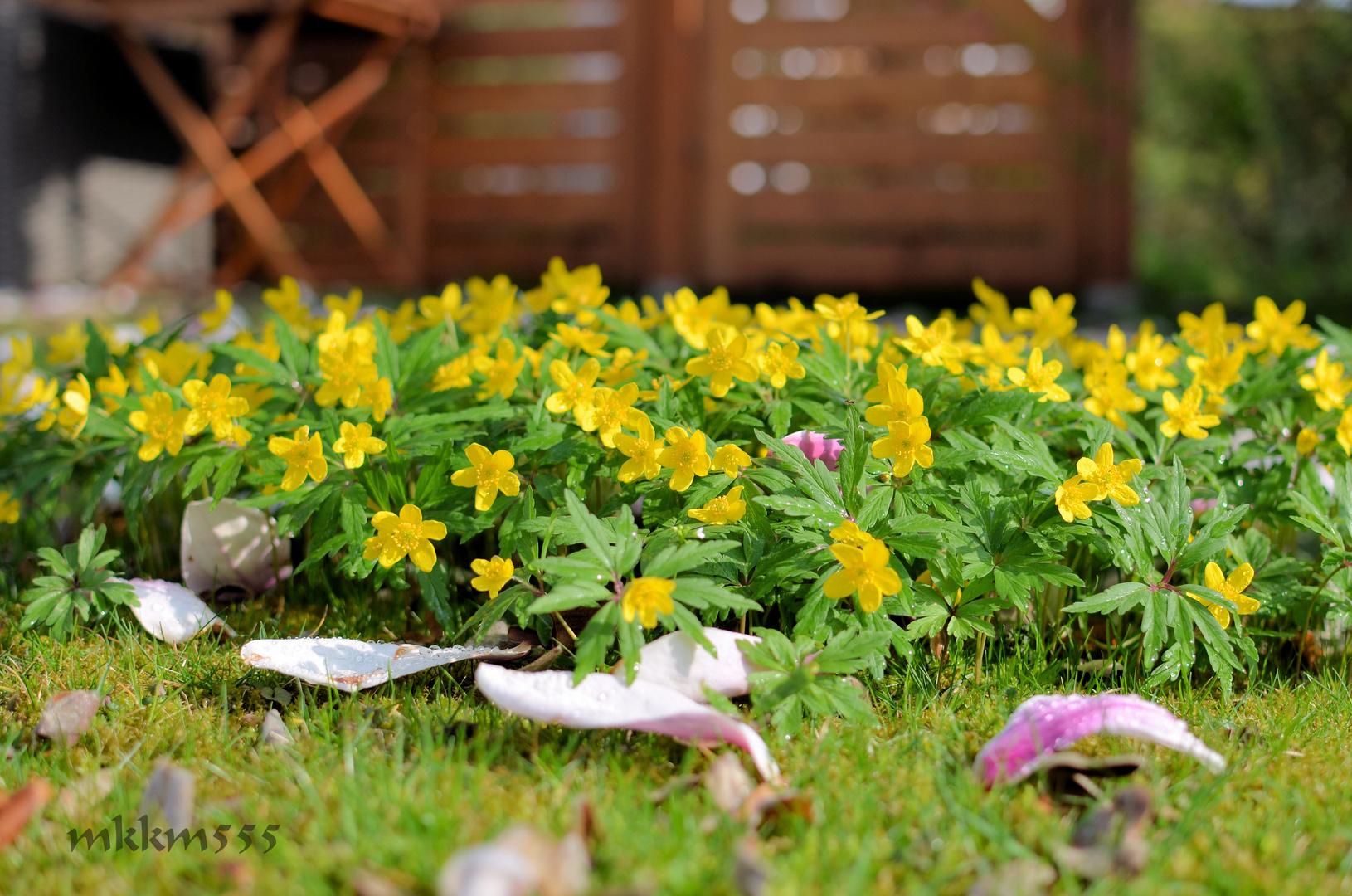 ...und da ist der Frühling!