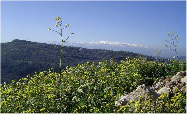 Und dahinten der Libanon