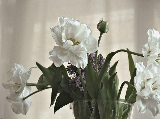 ...und dann gehts tipp tapp in die tulpen....