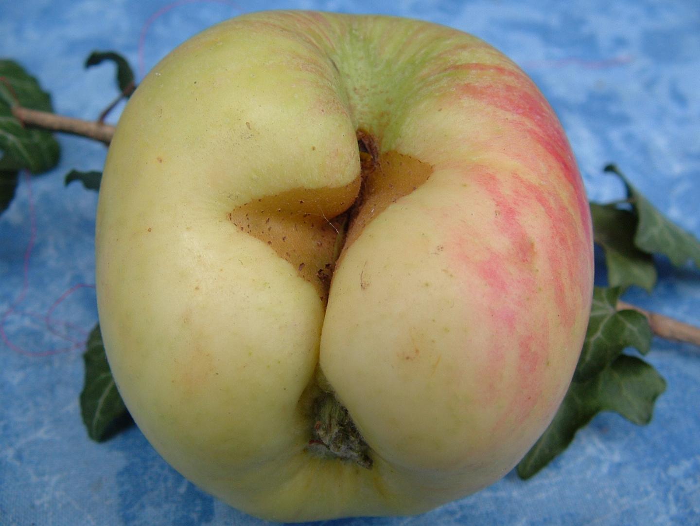 ... und das ist wirklich nur ein Apfel (;-)
