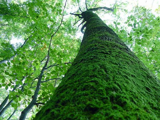 und der Baum trägt seinen Mantel