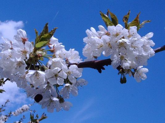 ....und der Frühling kommt doch.......